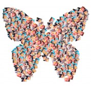 Butterfly' Photo Collage